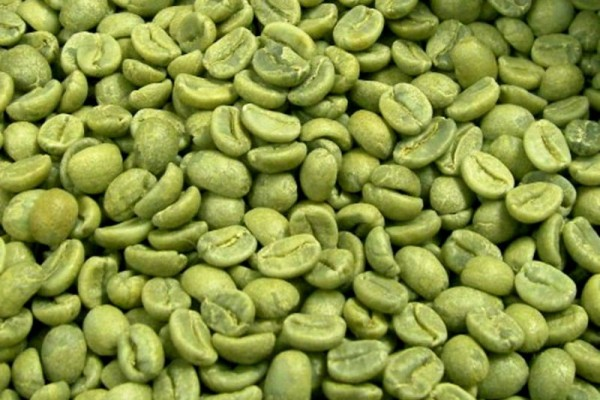 Badania kliniczne wyciągu z zielonej kawy
