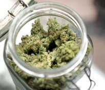 Medyczna marihuana dla każdego