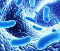 Probiotyki – dobre bakterie