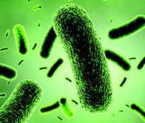 Bacillus coagulans – skuteczny probiotyk
